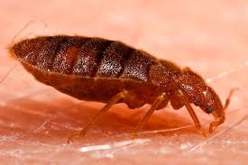 bed bug control fishers indiana